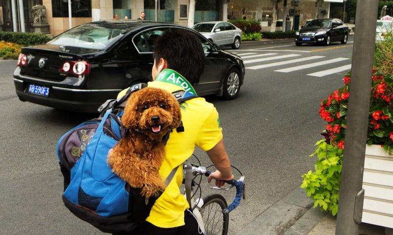 DogBackpack