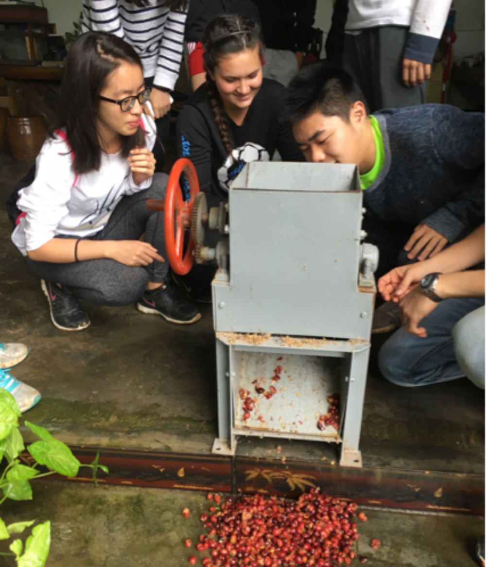 TCCR-Grinding-coffee-cherries-in-Yunnan