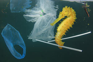 seahorse-with-plastic-bags