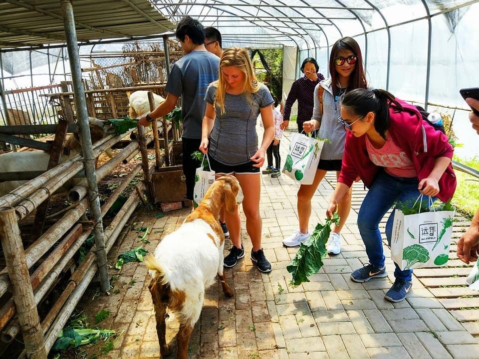 shanghai-students-at-organic-biofarm-feeding-goats